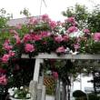 お友達の庭花