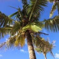 Trip to... Guam!