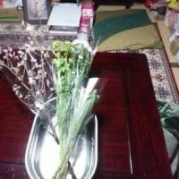 ♪ 明日は夫の祥月命日なので、 ご仏前の桜花と菜の花、 金盞花を買い求める