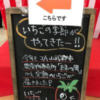 ふなっこ畑の焼き芋ジェラート