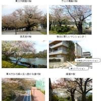 花見第4弾東京大岡山(H29.4.15)