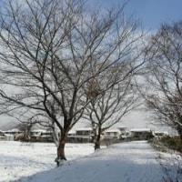 また、雪が・・・・