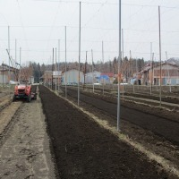 ホップ栽培施肥の省力化