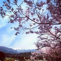 花の咲く頃
