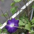 「朝の美人」 三重奏