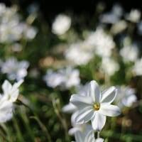 新宿御苑の花たち