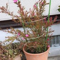 「寒波」ようやく行きました「庭を探したらこんな花々」。