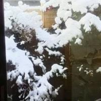 雪が積もって静かな朝でした