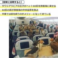 サウジの鳥、空を旅客機で飛ぶ