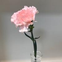 今週のお花と…\♡/