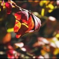 盆栽も紅葉
