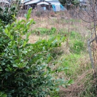 荒れ果てた以前の家庭菜園跡