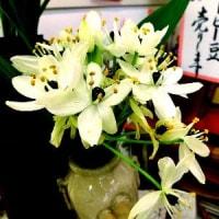 不明な花の名前が判明!