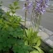 風が心地よい 風鈴に負けじと庭の片隅から虫の音が…