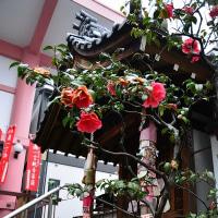 新京極通、誓願寺の花まつり