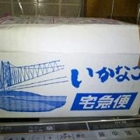 イカナゴの釘煮が神戸から春の便りを運んできた~