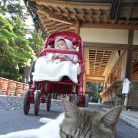 猫さんと一緒