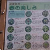緑地の散策ヘ(^^)