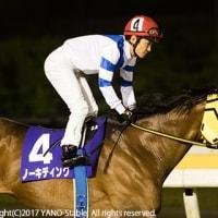 ハニーフィッツ初勝利!京成盃グランドマイラーズ(SIII)ノーキディングは8着でした。