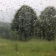 雨の笹ヶ峰