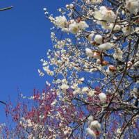 綱敷天満宮 「しいだ梅祭り」
