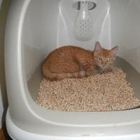 子猫のモカちゃんトライアルに入りました