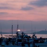 01/Mar 茅ヶ崎漁港の朝焼けとモズとミサゴ