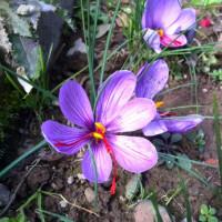 花盛り83