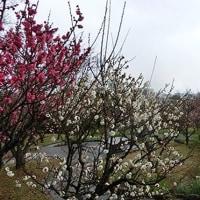 須磨離宮公園の写真でお遊び~
