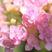 5/30 今日の花たち・今日は暑いね!!