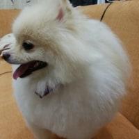 看板犬の光太郎
