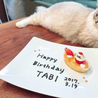 タビ君1歳お誕生日おめでとう♪