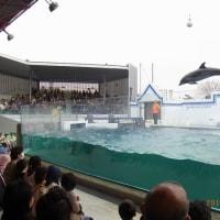 しながわ水族館とサメ