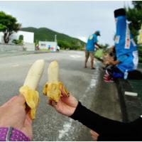 甘かった島バナナ