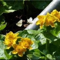 春ですねぇ(^^)♪