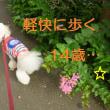 トイプードル  14歳のONとOFF ☆ミ(/ ̄^ ̄)/