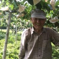 梨じい 93歳最後の梨の袋がけ