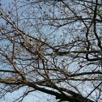 散歩で会ったジョー君~桜はまだでした~
