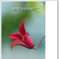 クレマチス グラブタイビューティーが、、咲いて、、。