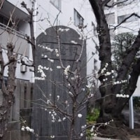 銀座の「白いばら」、ではなくて、新川の「白い梅」。