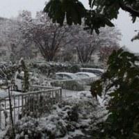 11月中の初雪