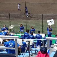 野球応援と花フェスタ公園