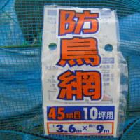 実豌豆(グリンピース)栽培、ヒヨ鳥対策に防鳥網を使用した