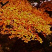 紅葉 (花 4112)