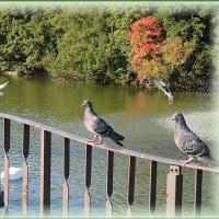 明石公園の鳥たち