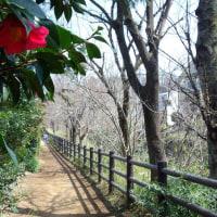 花咲けど送電線を鳴かす風