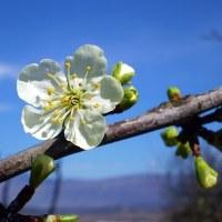 三月九日、桃の節句も過ぎて、もうすぐ春来る?