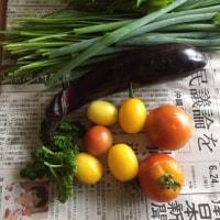 今日の収穫祭☆