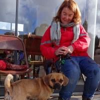 かわいい!パグとビーグルの合体犬、イギリスで大人気
