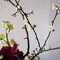 今日のいけばな*盛り花*さくら